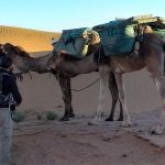 CAMEL TREK IN SAHARA 5 DAYS